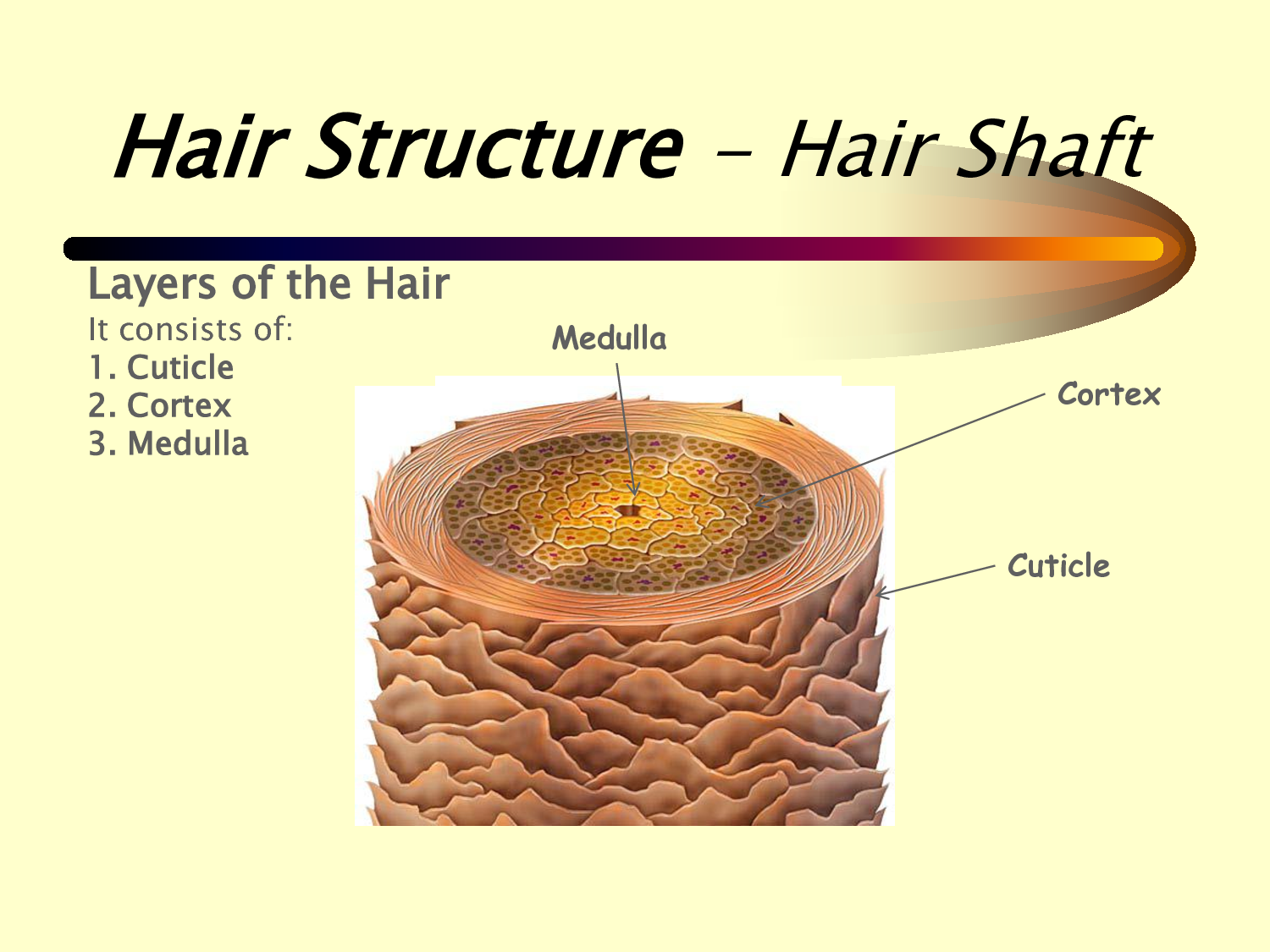hair-shaft