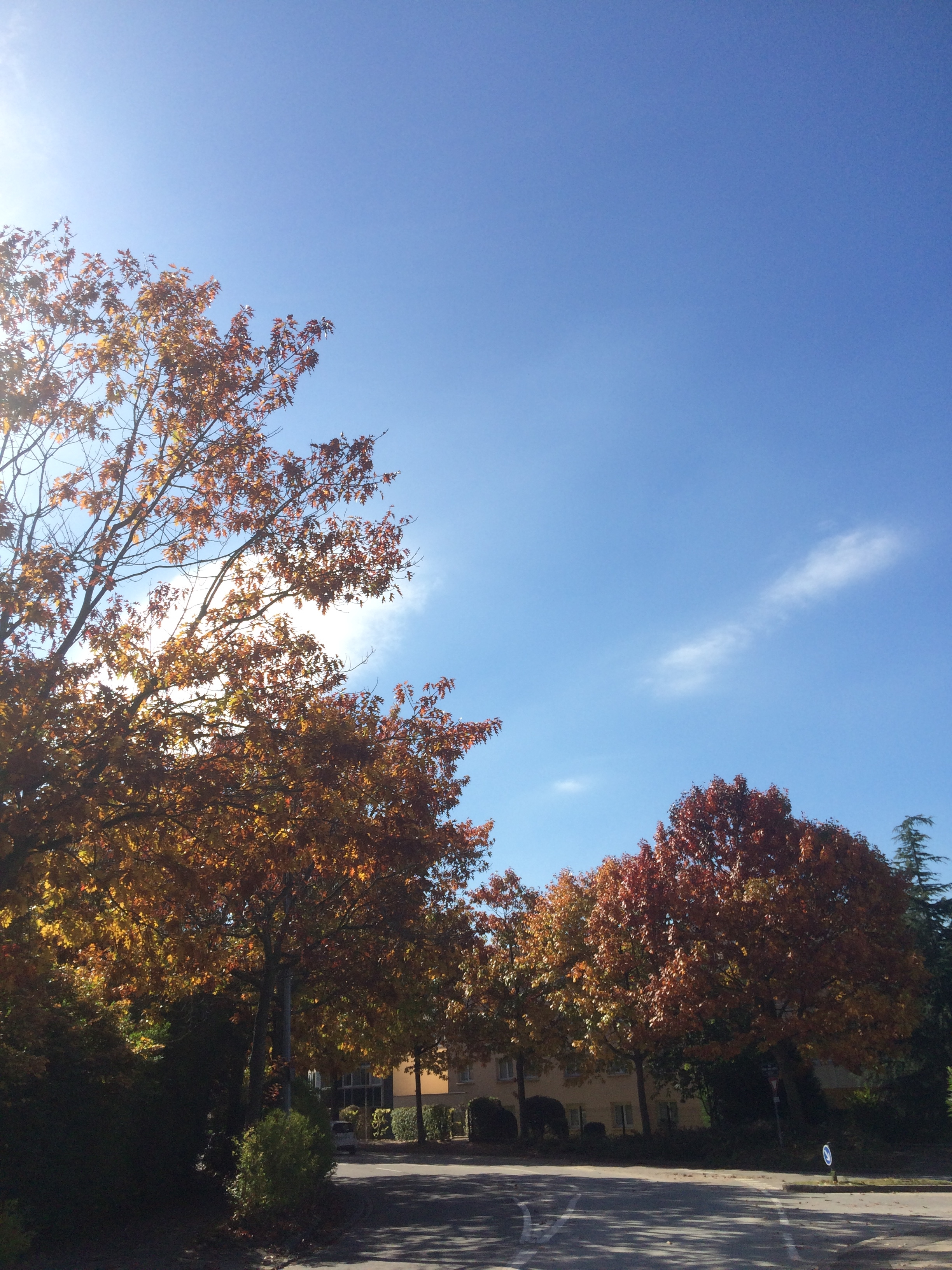 autumn-leaves-sunny-day-to-choose-to-be-beautiful
